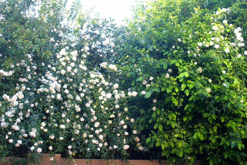 Overgrown 04.11.09