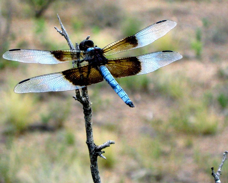 Dragon fly 08.19.09