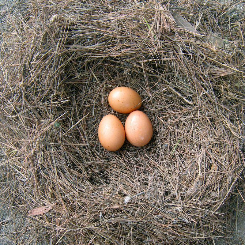 Nest egg 10.27.09