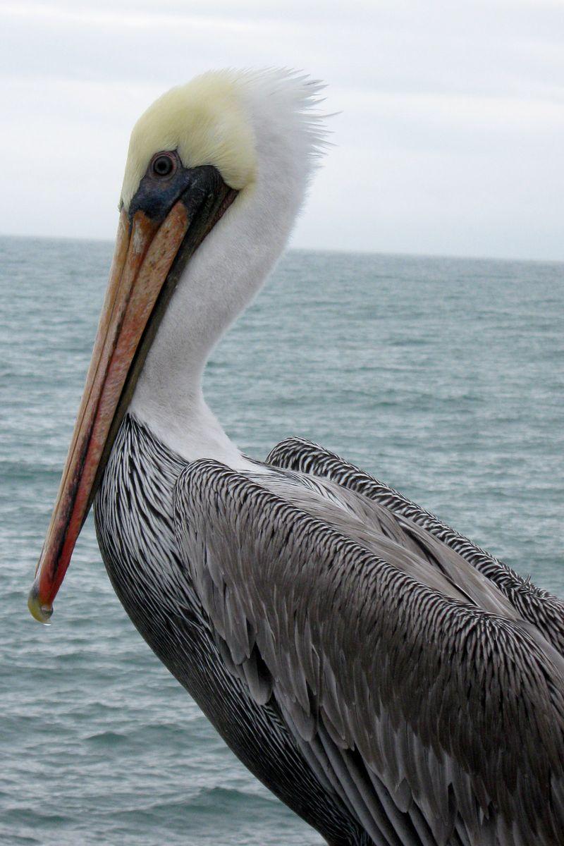 Pelican 1 10.27.09