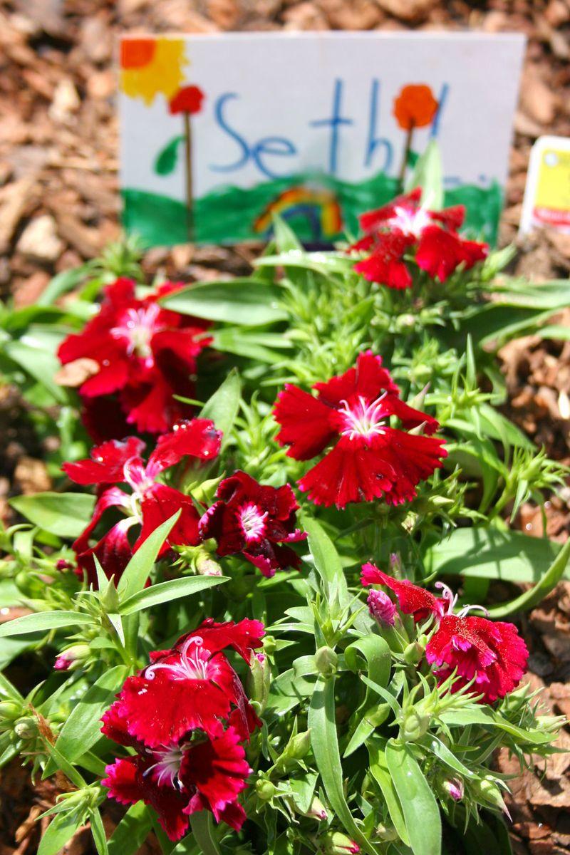 Flowers 2 04.07.10