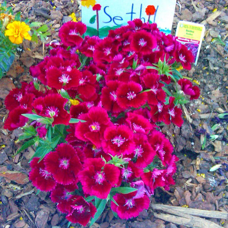 Flowers 04.07.10