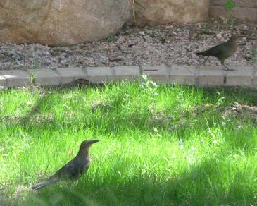 Birds_092408