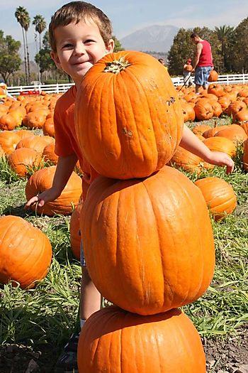 Pumpkin_robot